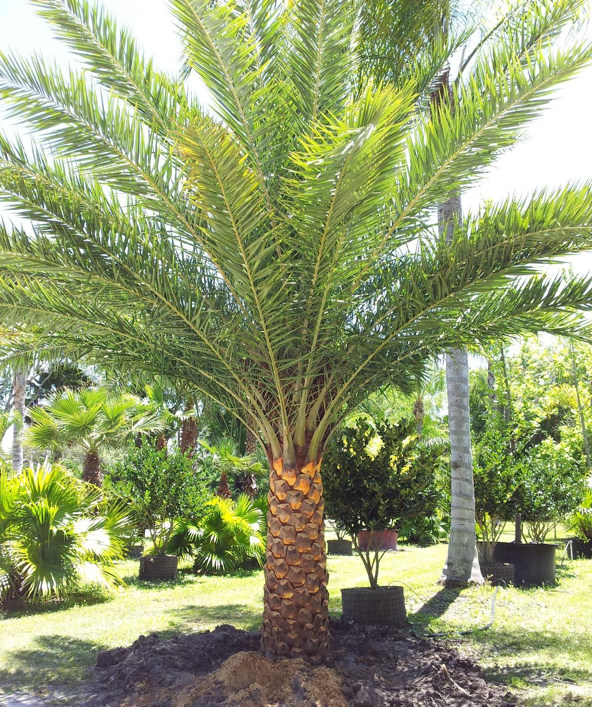 Tampa Landscape Nursery Tours Hydropro Sales Inc