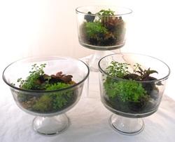 dish garden terrarium