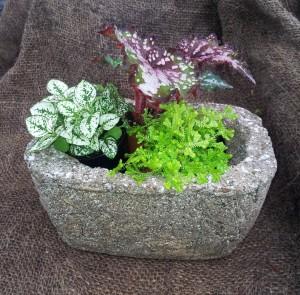 3 Plant Sampler