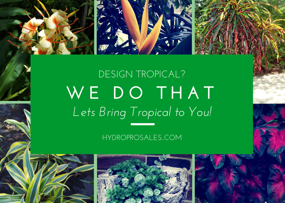 Tropical Landscape Design On Call Tampa Bay