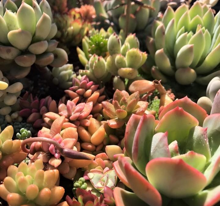 The Quick Guide to Propagating Succulents