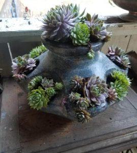amazing succulent planting
